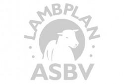 lambplan